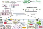 Genome Sequence is Deciphered for Endangered Himalayan Medicinal Herb Picrorhiza Kurrooa (Kutki)